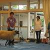 「羊さん、ありがとう!!(羊の毛刈り)」~明泉高森幼稚園(年少・年中・k4)~2017.6.2