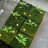 ロックウールオンリー栽培の「ネネ」、、円環の理を準備。