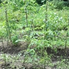 素人でもできる野菜づくり!逗子の畑の記録 (開始から3ヶ月)