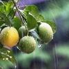 梅雨の体調管理は「脾」がポイント!胃の調子を整える食べ物とは?
