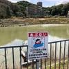 夫婦池(兵庫県洲本)