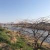 散歩日和だったので、二子玉川から多摩川沿いを歩き、等々力渓谷へ