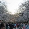 「外出自粛要請」1週前に、走りながら見た上野公園の桜