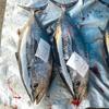 2021年3月1日 小浜漁港 お魚情報
