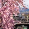 古谷の京都桜風景まとめ