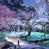 北野天満宮の梅苑のライトアップ2019。