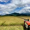 無農薬有機栽培「コシヒカリ」の刈取り終了と『たそがれ清兵衛』