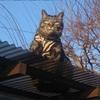また来た 猫の嫌いなダイナソー