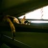 女ひとり台湾猫旅~猴硐(ホウトン)にて~その1
