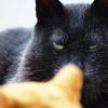 猫が液体にも個体にもなれる?
