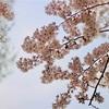 【休職日記】春はせわしない。温度調節難しい。鼻水が止まらない。【退職決意の巻】