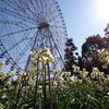 【お花見16】 葛西臨海公園の水仙 【サイクリングコース10】若洲公園お台場 コース沿い