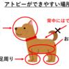 犬のアトピー、犬アトピー性皮膚炎とは?