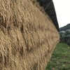 米刈りの季節