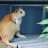 台風の夜、野猫はいったいどこにいるのだろう?