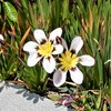 庭先&公園の花
