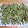 山菜採り・・タラの芽
