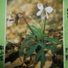 4月2日誕生日の花と花言葉歌句