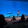 ナイトヨガin名古屋港水族館に行ってきた