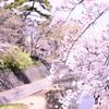 【写真】夙川に桜を撮影しに行ってきた!