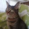 長引く猫の血尿。療法食を3カ月続けた結果
