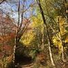 11月11日(日)僕の低血糖についての考察。親子ハイキング〜10kmジョグ