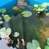 水槽に藻!薬を使わず解決したい!