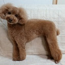 犬ばかのaaangel's blog