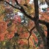 雪の青森から京都南禅寺の紅葉をアップップ(^^♪