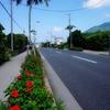 レンタルバイクで巡る、八丈島の絶景観光スポットまとめ