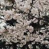 桜のようにほっこりすること
