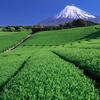 静岡産の美味しいお茶を頂いたので、日本茶の歴史と種類について調べてみた