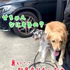 洗車と洗犬