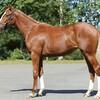 ノルマンディー募集馬全頭評価 募集番号21~27
