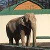 村上春樹さん「象の消滅」を再読。