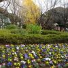 ミモザ・ガーデンの日記 飛鳥山の紅葉