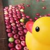 地元 新穂の齋藤農園さんより頂いたリンゴで、今季最後のリンゴ風呂!
