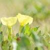 パステルな草花たち