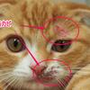 猫にカビが生える!?原因、症状、治療法は?