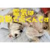 ❝人感センサー付ライト💡❞  愛犬と暮らす家の工夫⑥