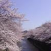 2019町田さくらまつり 開催情報 その1
