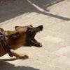 モラハラ夫のペットは飼い犬までモラハラ犬