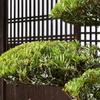 剪定された庭の植木
