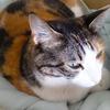 【愛猫日記】毎日アンヌさん#247