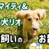 子犬とシニア犬 多頭飼いのお散歩