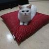 【67本目】猫様が12歳になりました