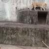 広島安佐動物園2、ライオン・ヒョウ