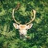 勝てない愛と鹿と酒