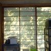 緑のカーテンのゴーヤは今年は不作でしたが、朝目覚めると障子に映ったゴーヤの葉に気持ちが和みます。