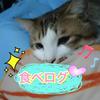 Ayatoのコンビニ食べログ予告♡画像付き